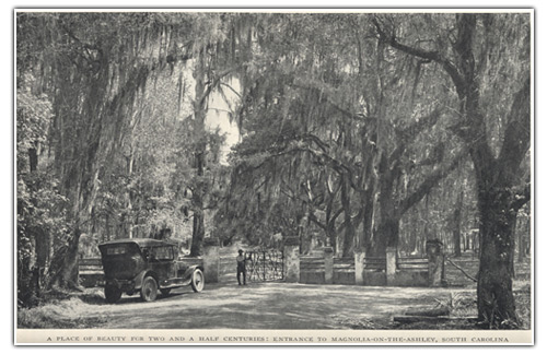 featured:magnolia-plantation